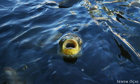 Balıklı Göl , Şanlıurfa